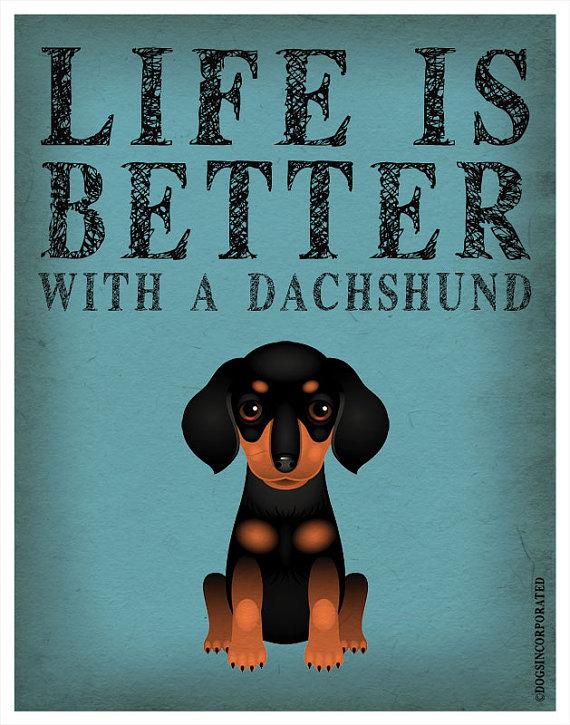 dachshund_doginc